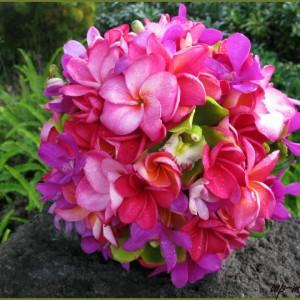 wp-master_ir_Pink_Bridal_Flower4